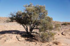 Desert19