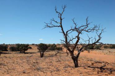 Desert21