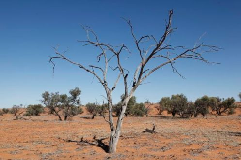 Desert23