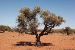 Desert26