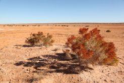 Desert27