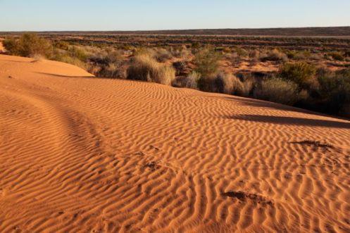 Desert31