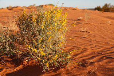 Desert32