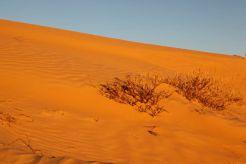 Desert54