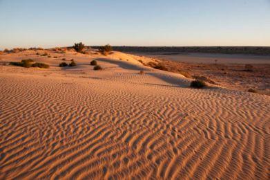 Desert55