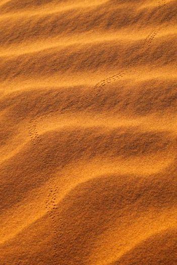 Desert57