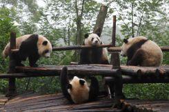 ChengDu15