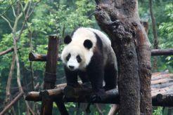 ChengDu17