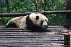 ChengDu18