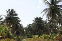 Shell Beach15