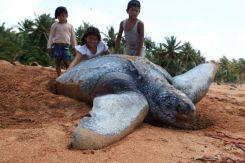 Turtles07