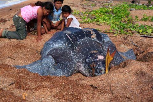Turtles21