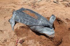 Turtles24
