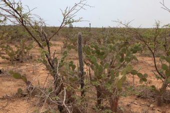 Guajira24