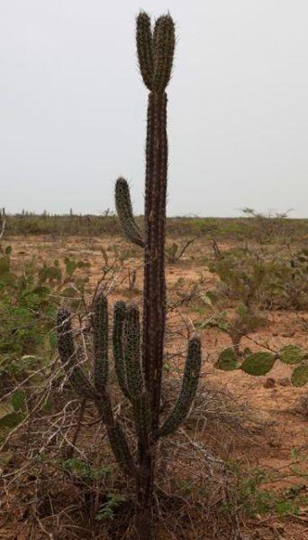 Guajira25